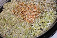 How to Grow Sprouts in a Jar